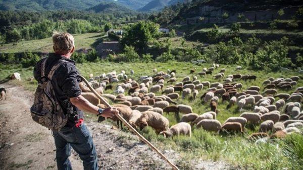 Campaña de apoyo al sector ganadero ecológico, muy afectado por la crisis de la COVID-19