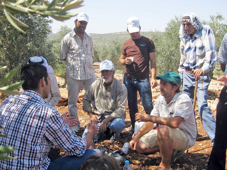 palestina-olivar