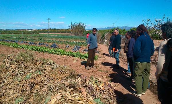 ¿Nos ayudas en esta investigación sobre sistemas alimentarios locales en España?