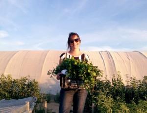 plantas aromáticas ecológicas