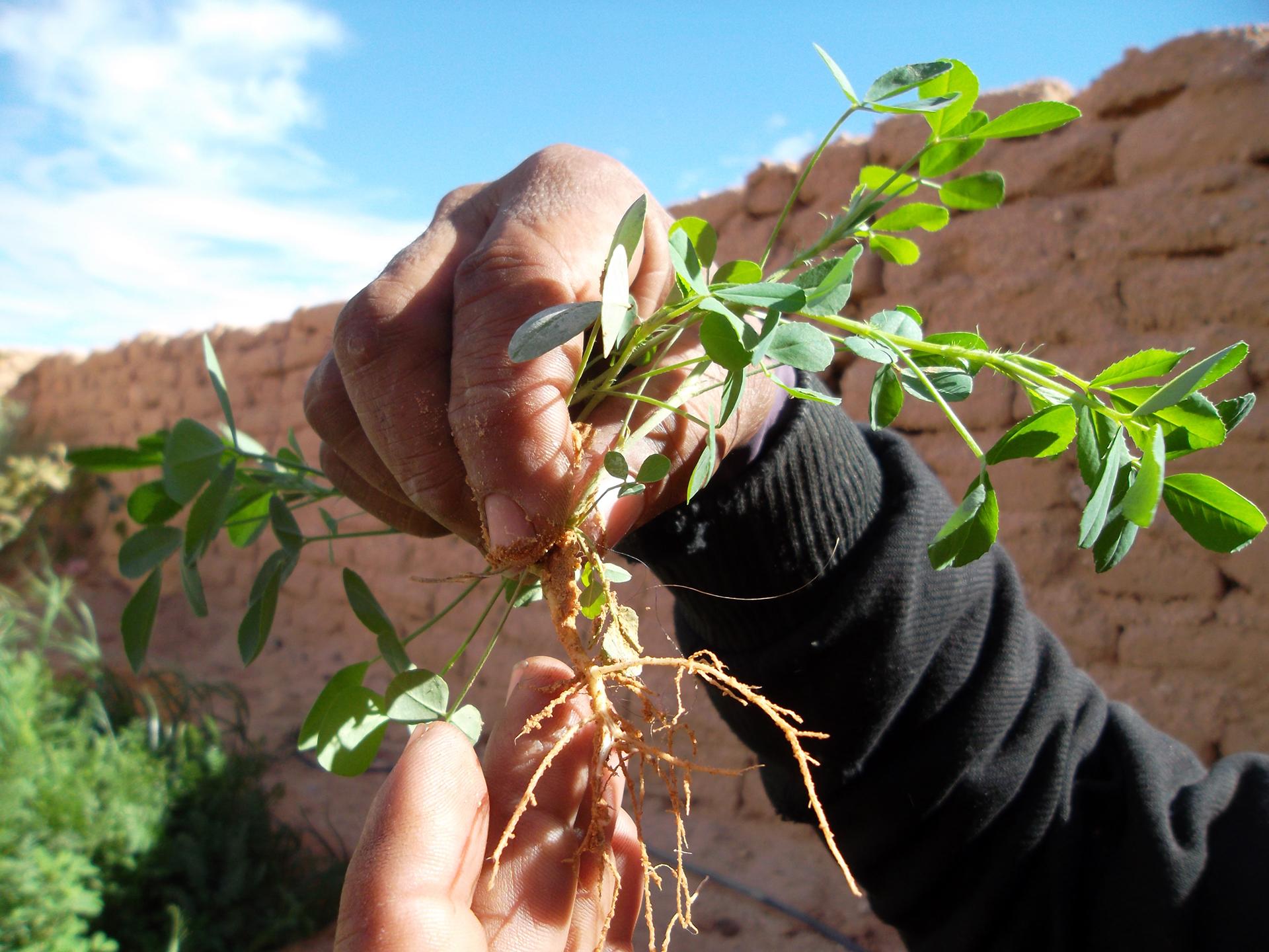 Fotos Huertos Sahara (1)
