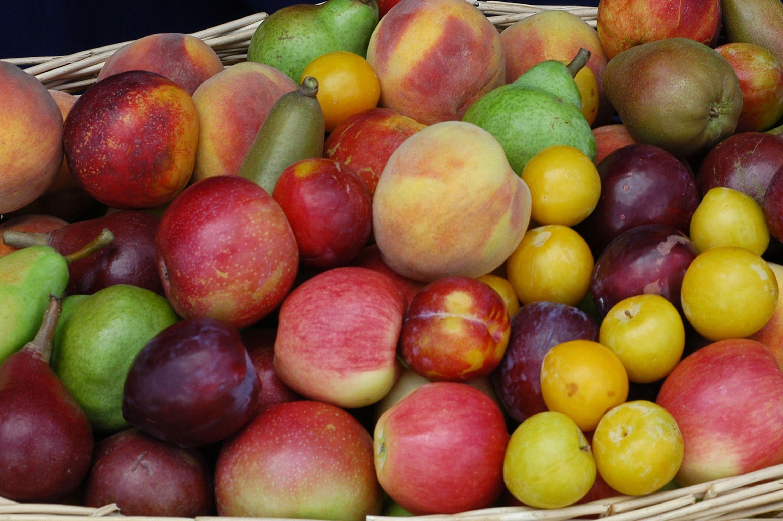 Curso Técnico de Fruticultura. Módulo III