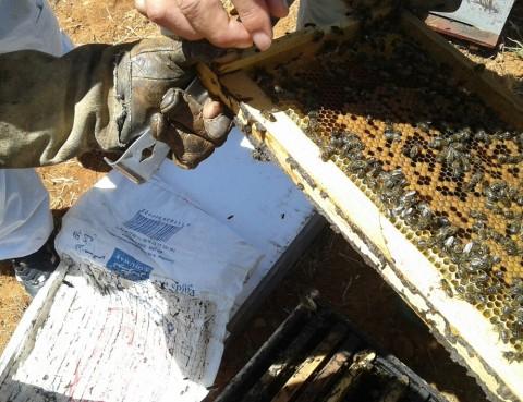 apicultura ecológica