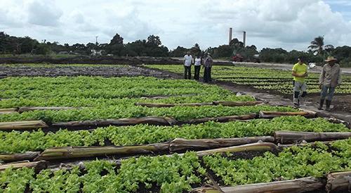 Productor agroecológico Cuba