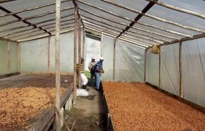Secadero de cacao