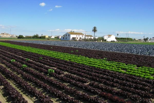 El regadío histórico de la huerta de Valencia presenta su candidatura como SIPAM