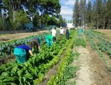 Escuela Agrícola Km0)