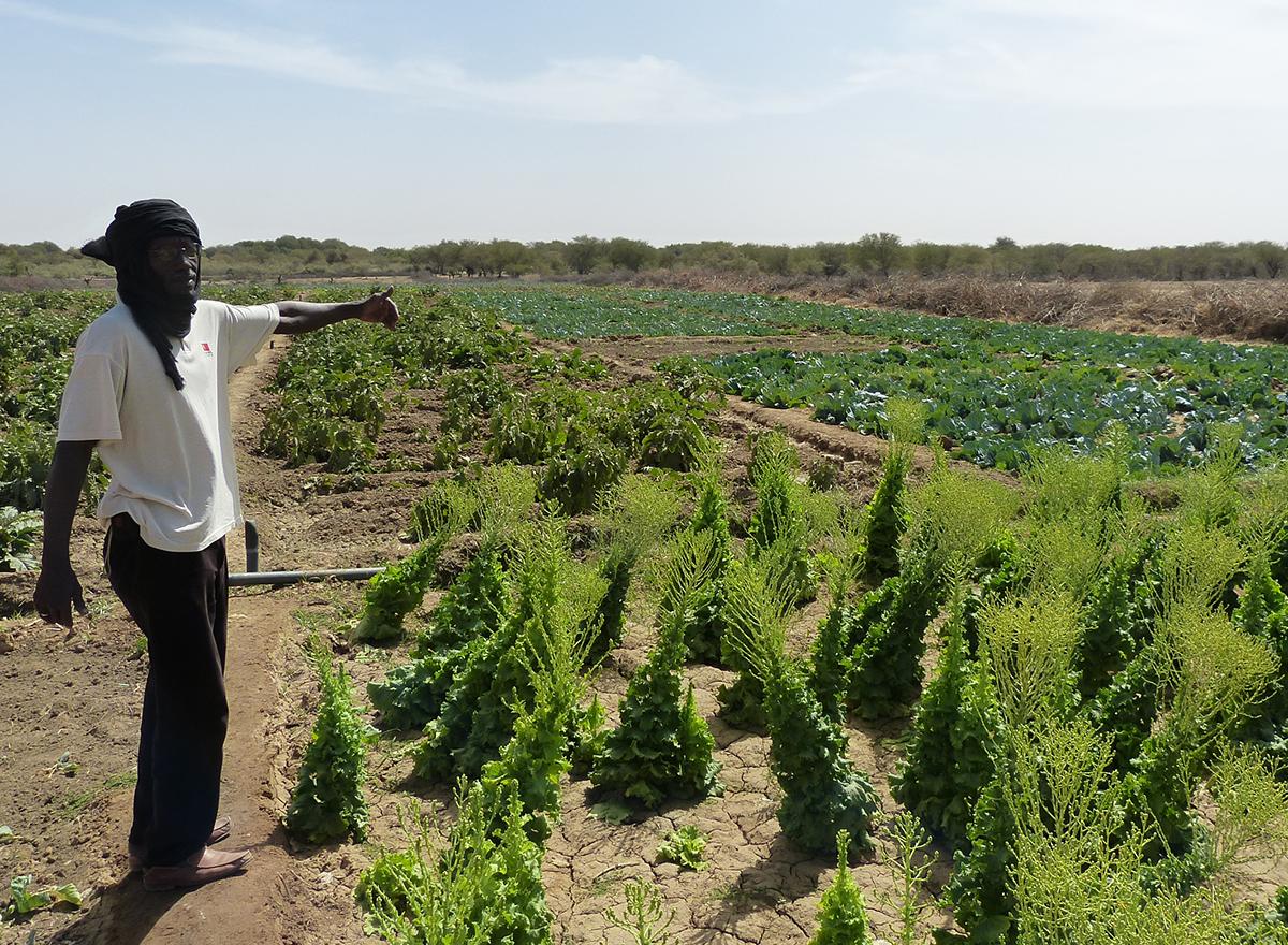 Publicación de Términos de Referencia (TdR) para la realización de una asistencia técnica en Mauritania