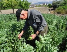 agricultor ecológico