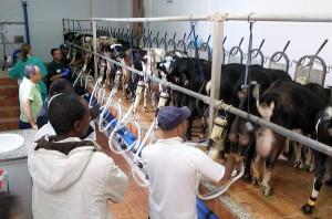 Visita a una sala de ordeño mecánico en la granja de cabras de Lorenzo Martín en Fuerteventura