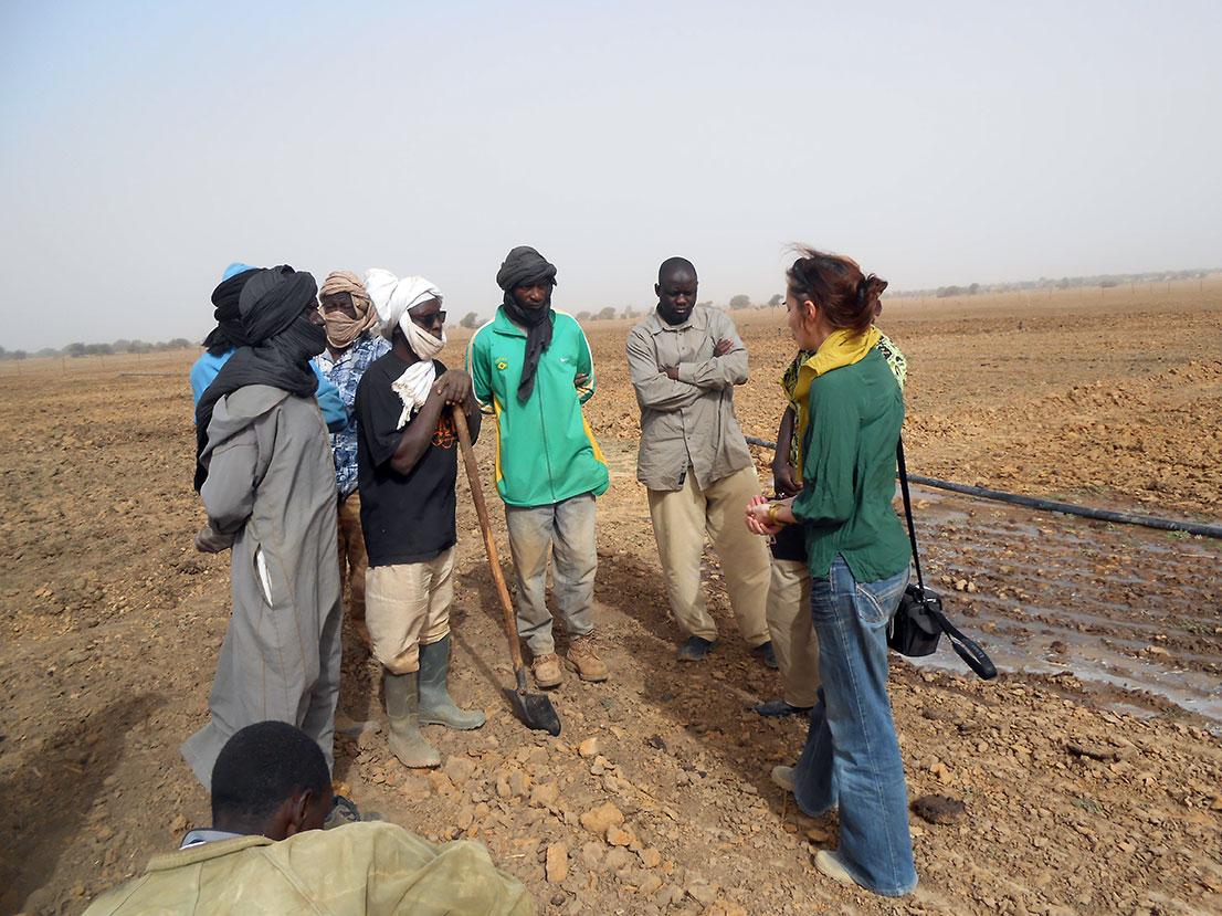 Publicación de TdR para un diagnóstico de cultivos de secano en Mauritania