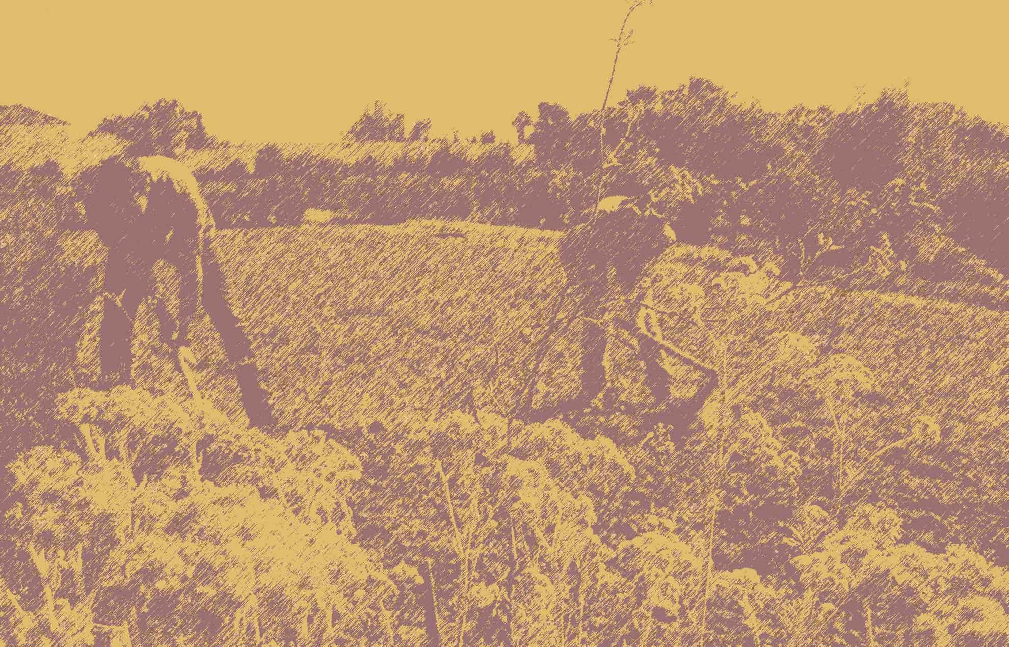 Jornada 'Agricultura Sostenible y Cooperación al Desarrollo'