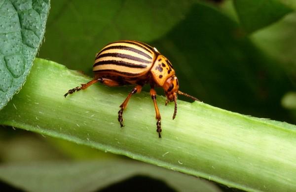 control agroecológico de plagas