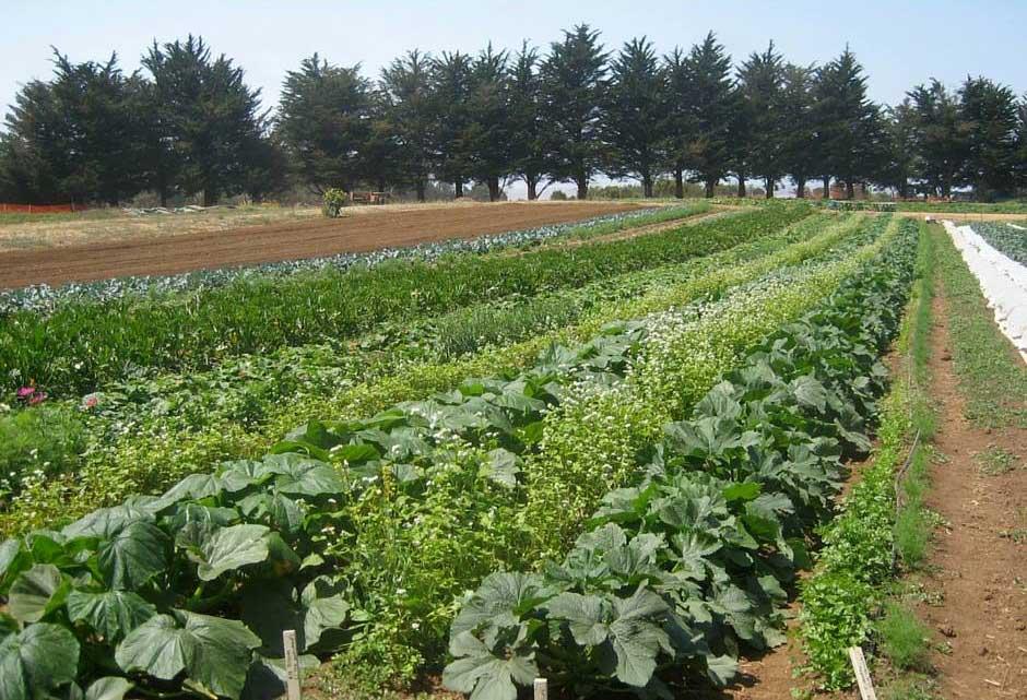 Empleo: Técnico para el Área de Agroecología de CERAI Aragón