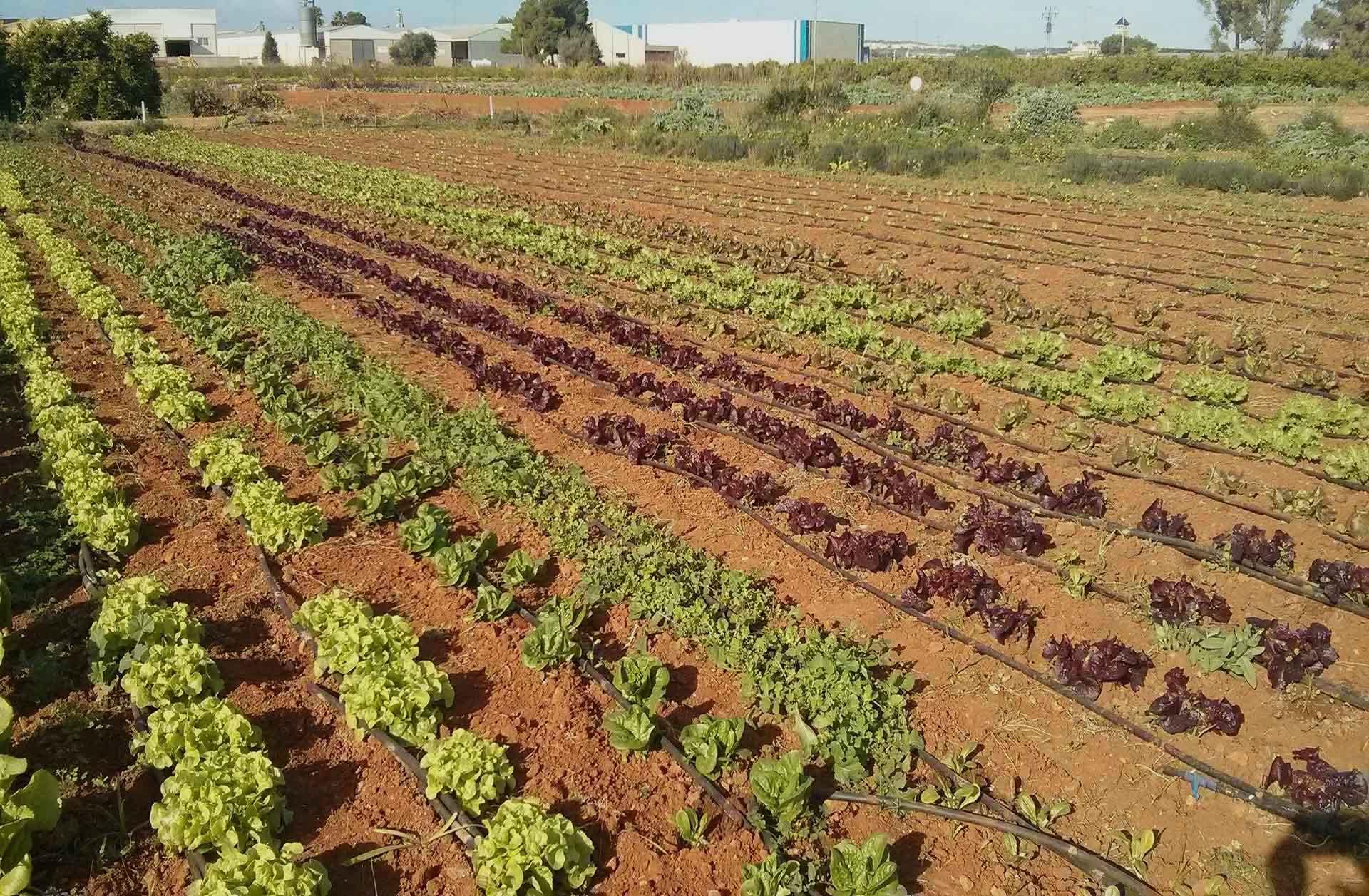 Marco Teórico de los Enfoques Agroecológicos