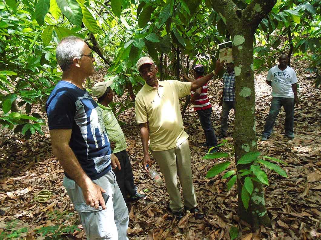 La producción agroecológica de cacao en República Dominicana obtiene excelentes resultados
