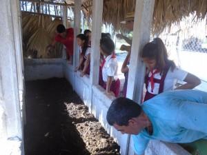 Cuba-haciendo humus de lombriz