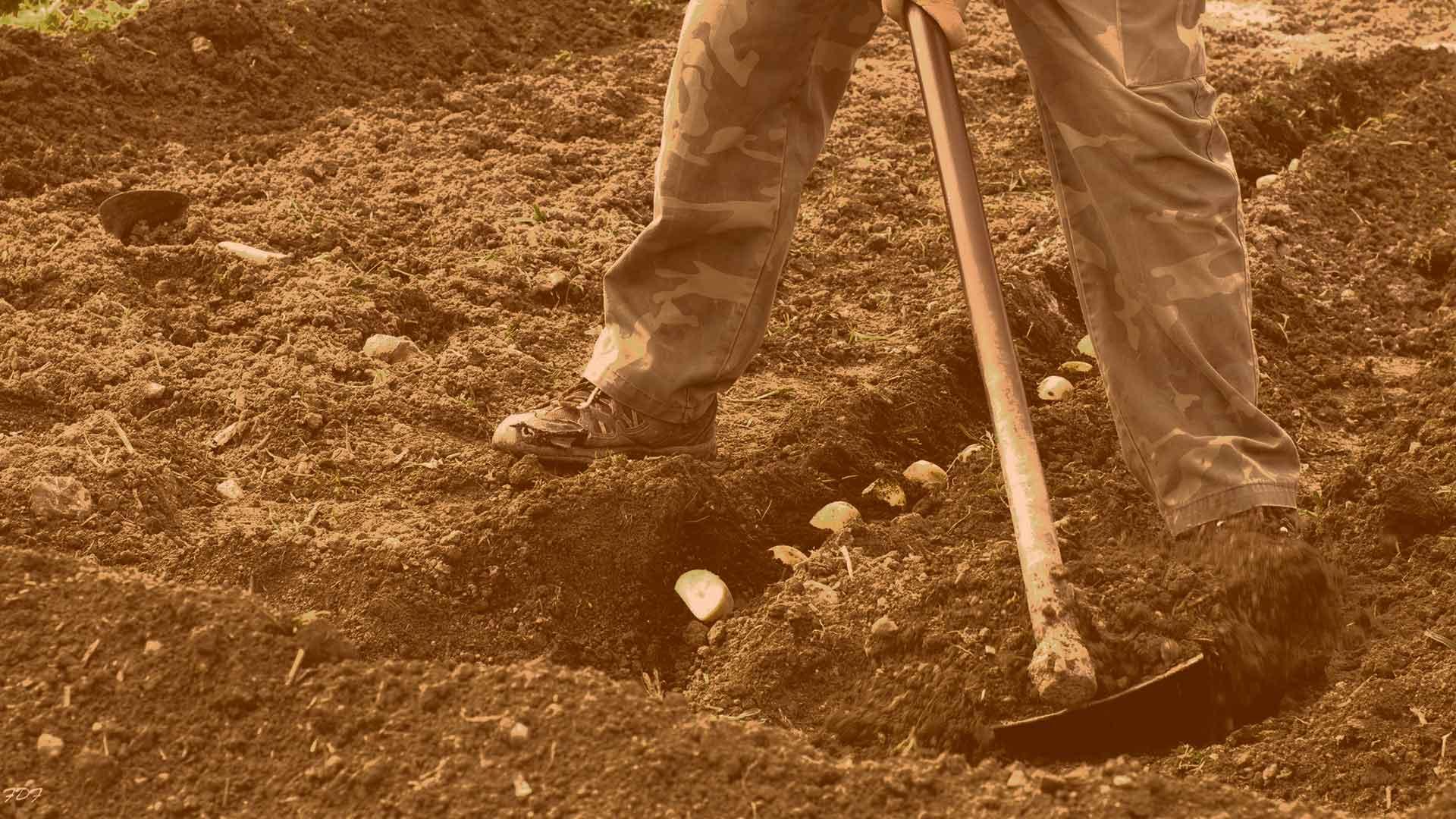Curso en Granada: La práctica agroecológica en el desarrollo rural. Los huertos urbanos.
