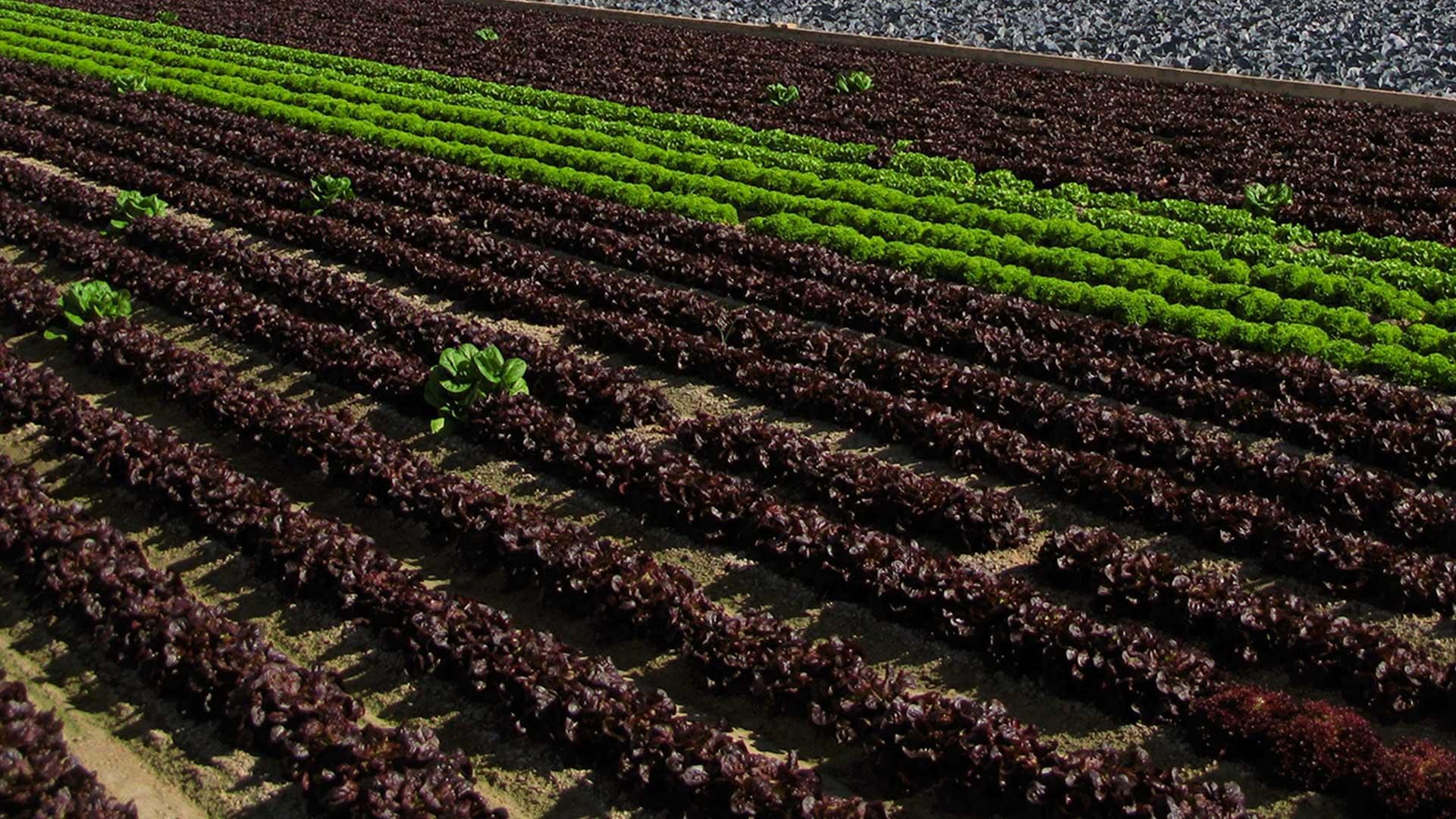 IV Curso Internacional de Agroecología y Desarrollo Rural Sostenible en Valencia