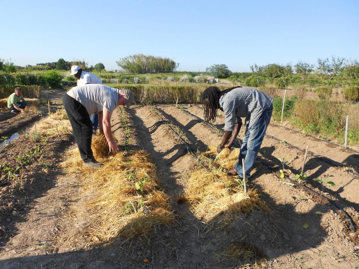 Curso en Madrid: La práctica agroecológica en el desarrollo rural