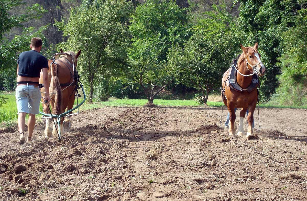 Jornadas de iniciación: Tracción animal en la horticultura