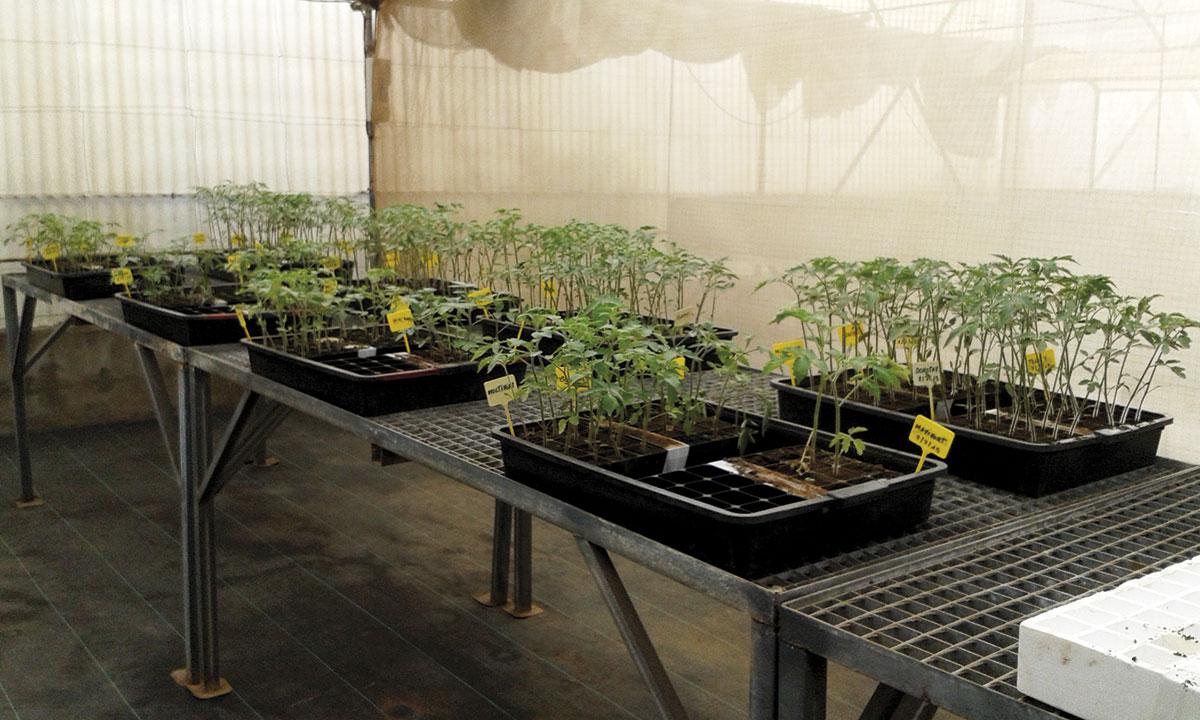 Curso presencial en Tenerife: La actividad biológica de los suelos