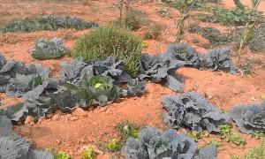 concurso agroecología Trarza (3)