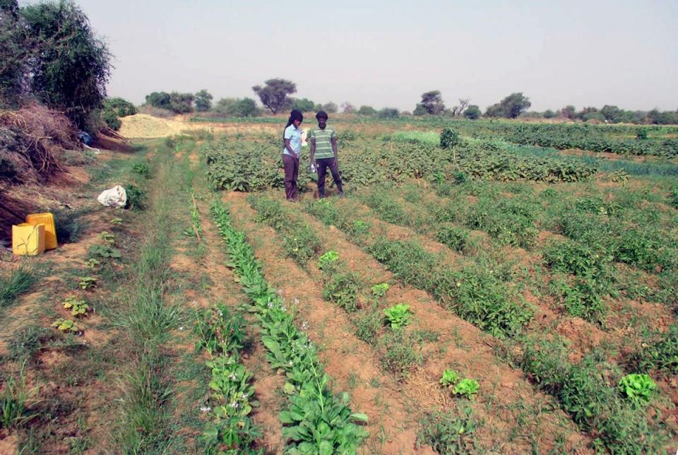 concurso agroecología Trarza (2)