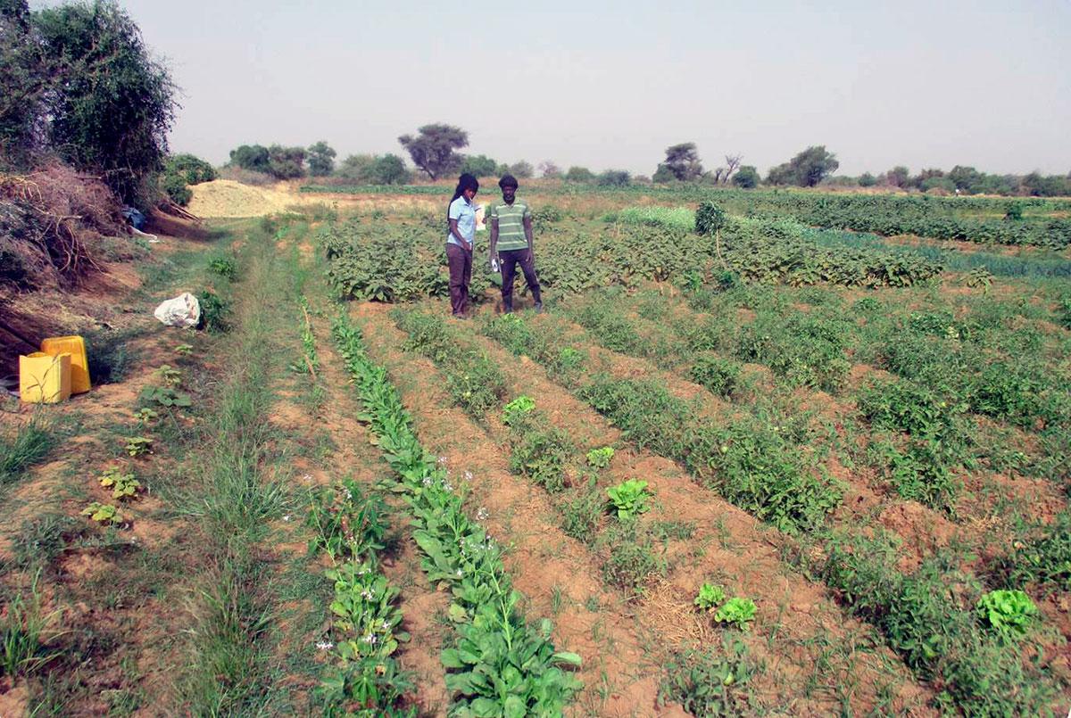 CERAI promueve la agroecología en Mauritania mediante un concurso entre los agricultores locales