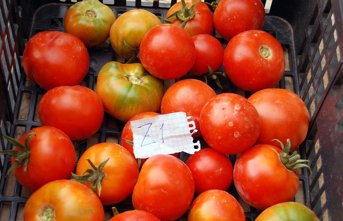 CERAI publica una investigación sobre la recuperación de variedades locales
