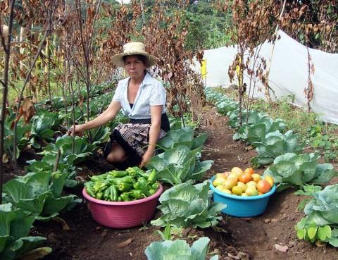 Huertos familiares agroecológicos