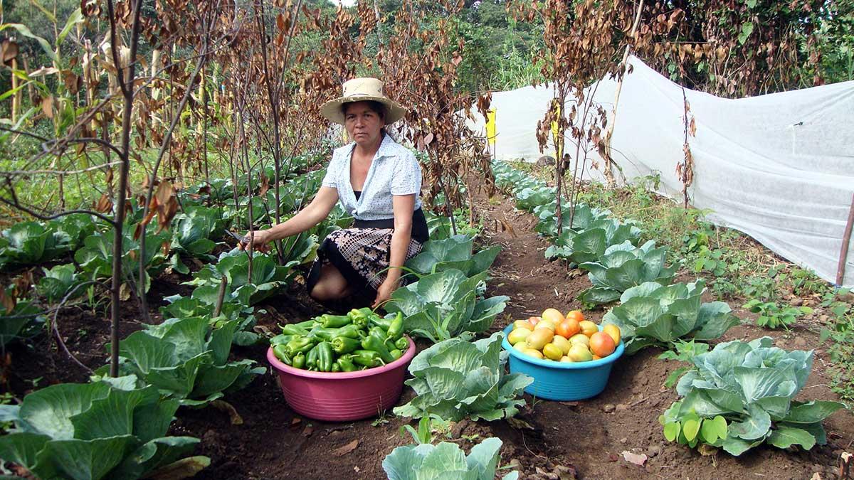 CERAI impulsa la transición a la producción agroecológica en El Salvador