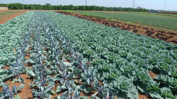 La hora de una transición agrícola y alimentaria ha llegado, ¡despertemos!