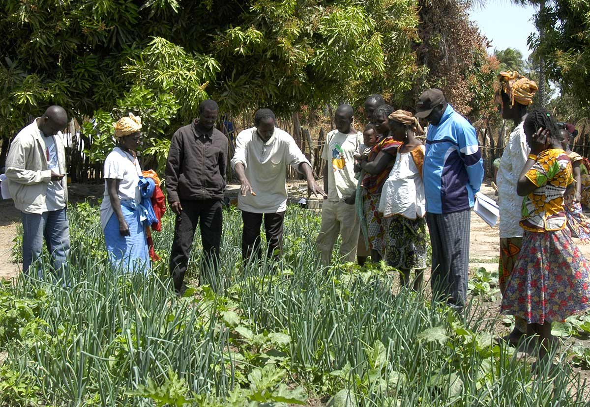 CERAI realiza una asesoría en materia de transición agroecológica en Níger