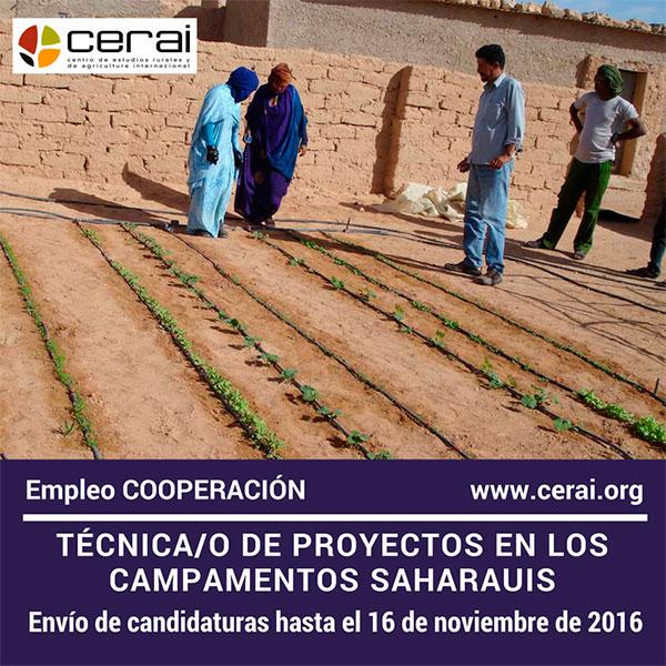 empleo-Sahara-2016-redifusión