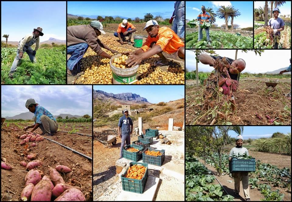 La Red de Abastecimiento de Comedores Escolares de São Vicente, reconocida como buena práctica agroecológica