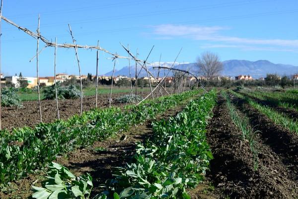 Horticultura y jardinería ecológica
