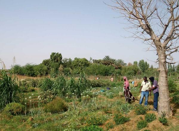 Asistencia Técnica para la elaboración de una estrategia de desarrollo agroecológico en Mauritania