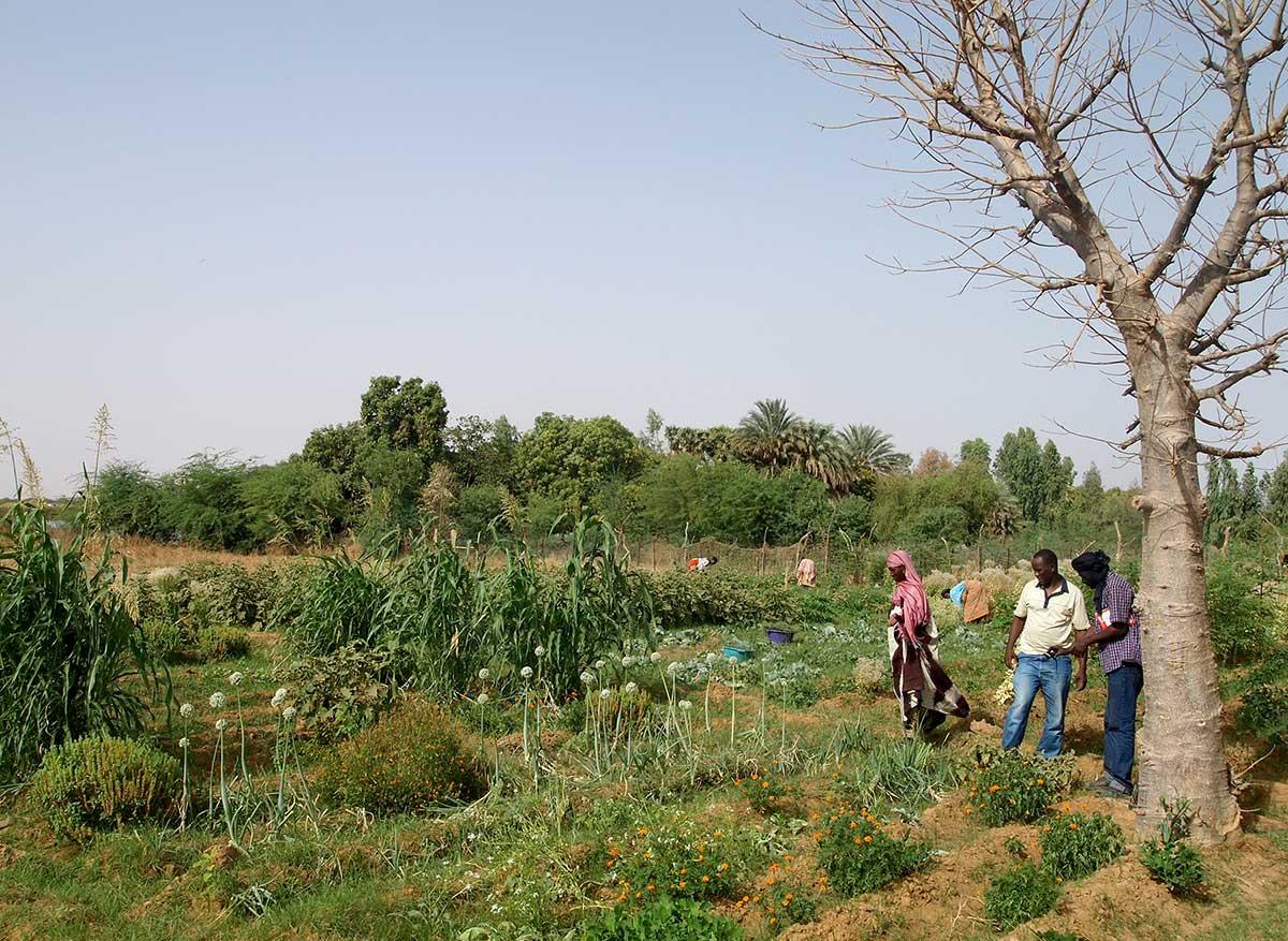 Mediante la formación, divulgación e intercambio de experiencias, promovemos la agroecología en Mauritania