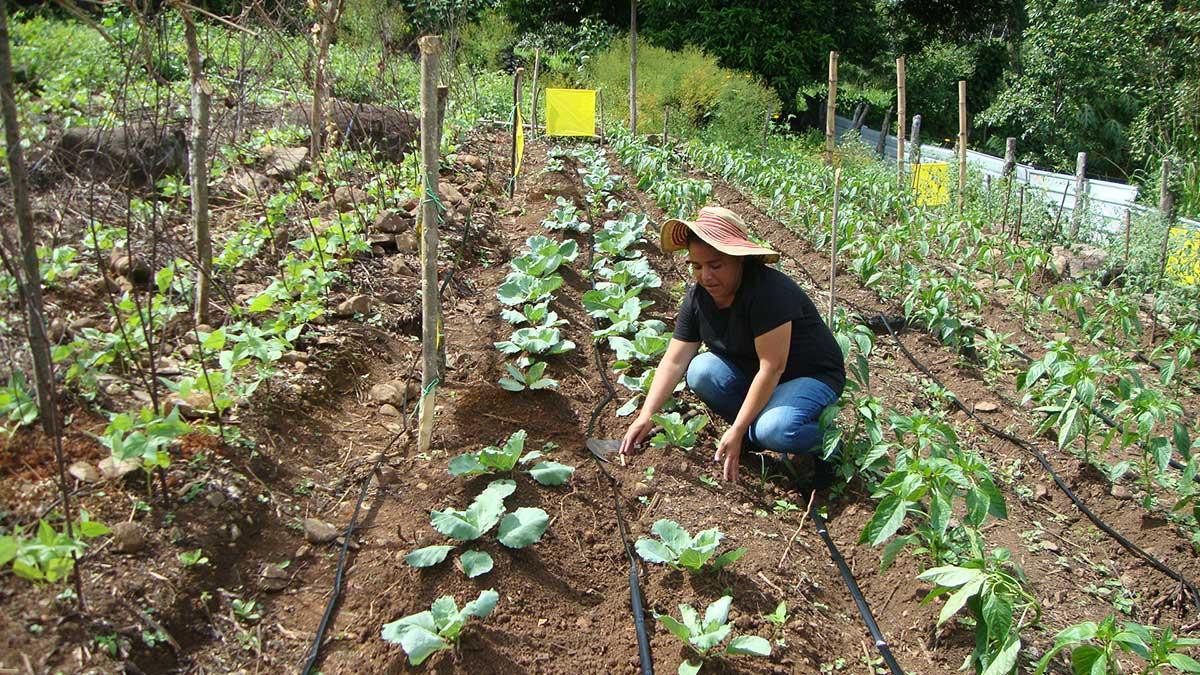 El impulso de las mujeres rurales de Cuscatlán-Cabañas en el fortalecimiento de la Soberanía Alimentaria y el feminismo salvadoreño
