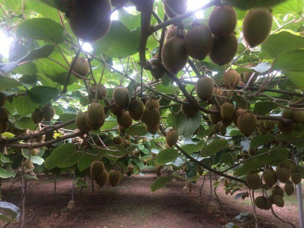 La práctica agroecológica en la agricultura biodinámica