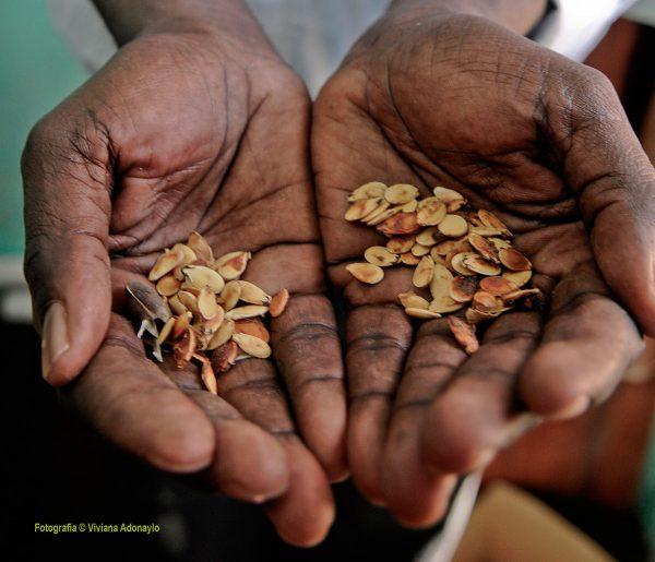 Los sistemas alimentarios y el medio rural en la crisis del COVID-19