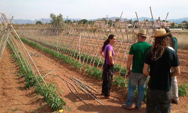 Iniciamos una investigación sobre iniciativas agroalimentarias sostenibles en España