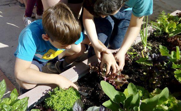 De los colegios a la universidad: seguimos fomentando la alimentación sana, saludable y sostenible