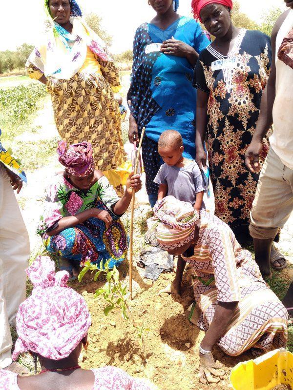 Recibimos una donación de árboles frutales y semillas para Mauritania