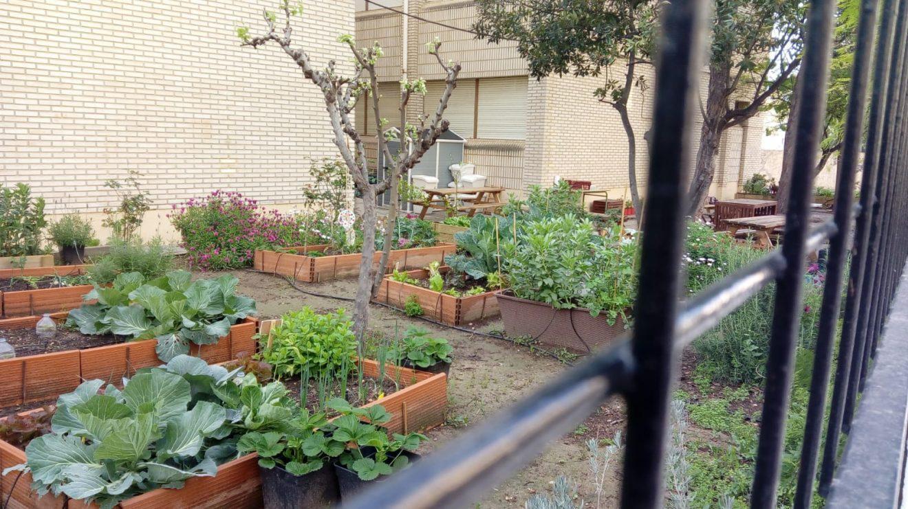 Una llavor a l'escola: fomento del huerto escolar agroecológico en colegios de Valencia