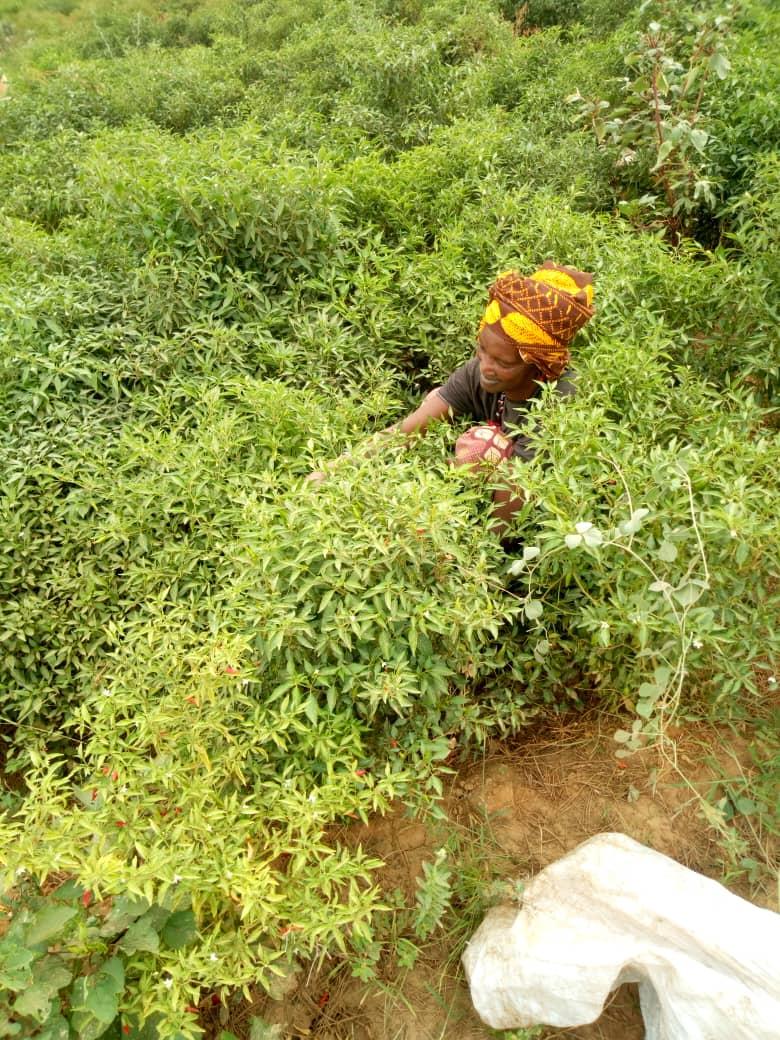 Implantamos medidas en Senegal para mitigar los efectos de la COVID-19