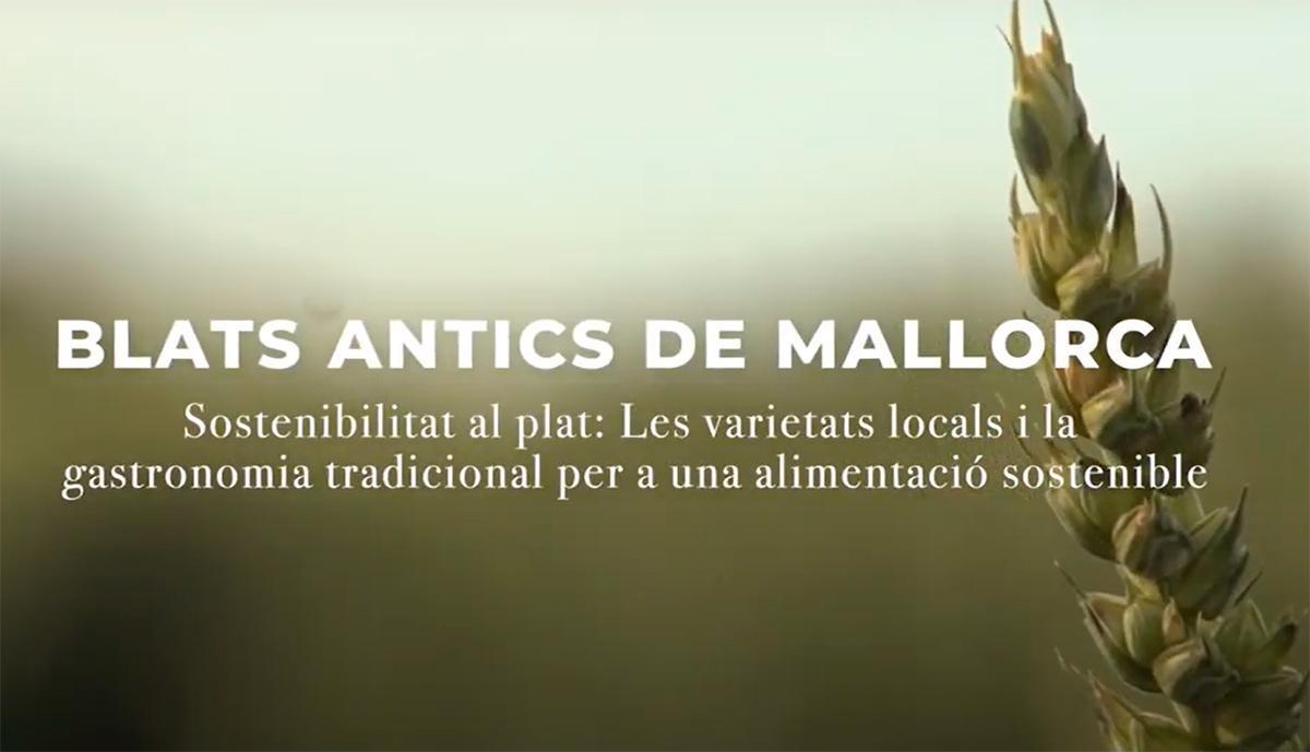 Varietats locals: blats antics de Mallorca (Sostenibilitat al Plat-Illes Balears)
