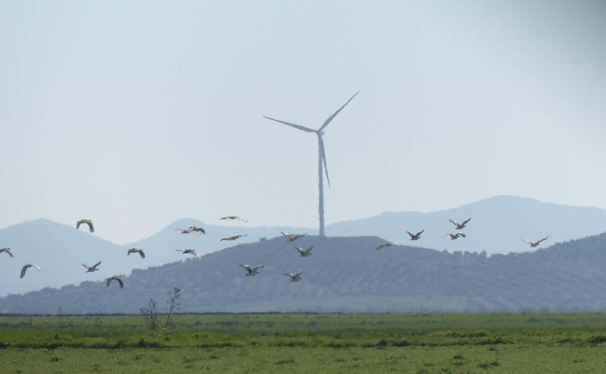 En defensa de la biodiversidad frente a las renovables a gran escala