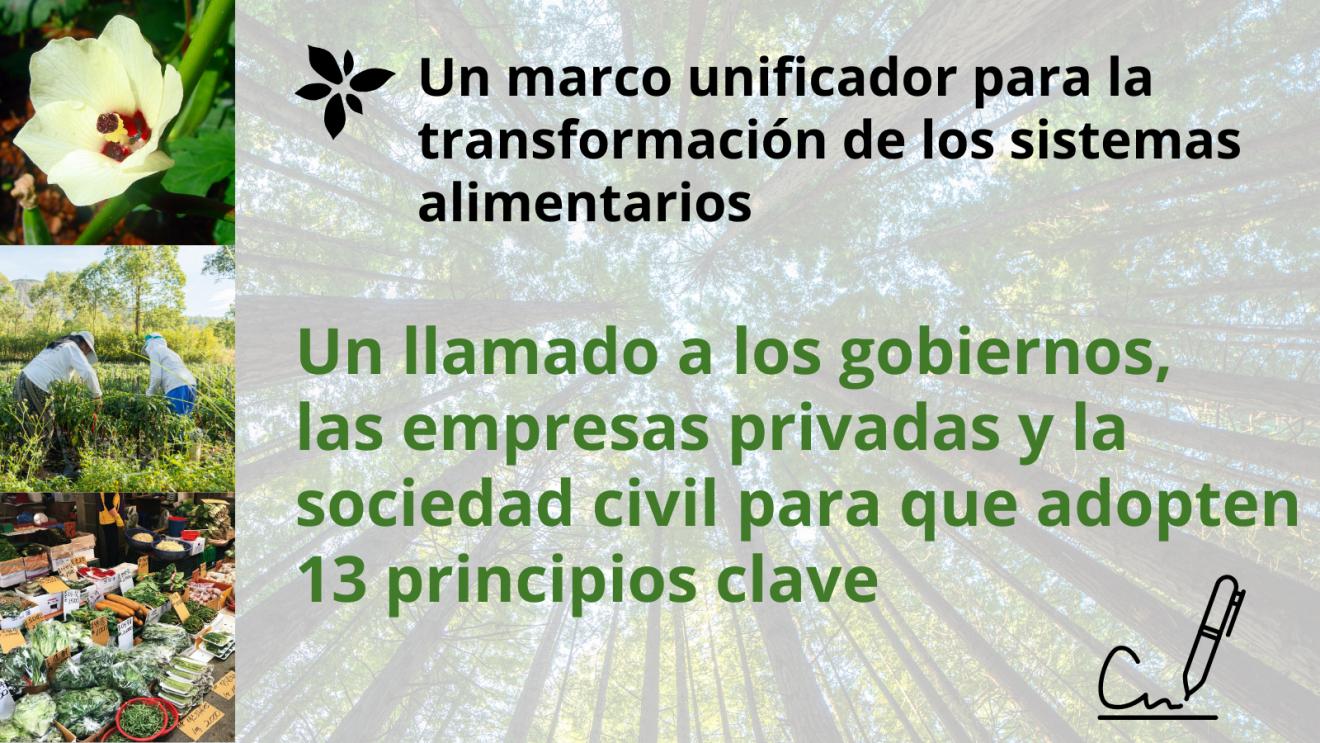 Defendemos 13 principios clave para la transformación de los sistemas alimentarios